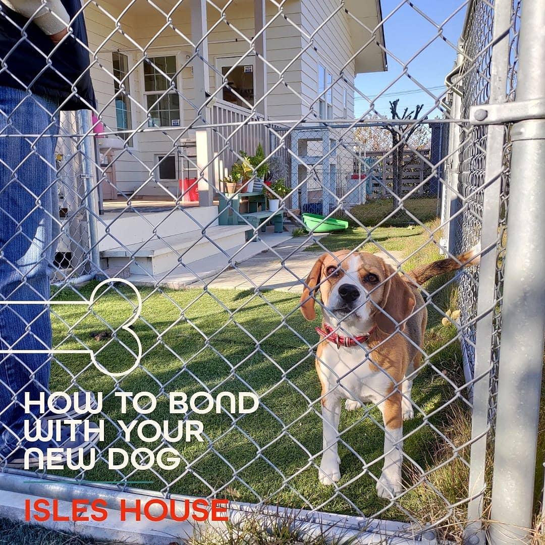 愛する家族と暮らす家。 元気に駆け回るワンちゃんを見ているだけでも自然と笑顔になりますね! #犬と暮らす #犬のいる暮らし #dogperson #beagle