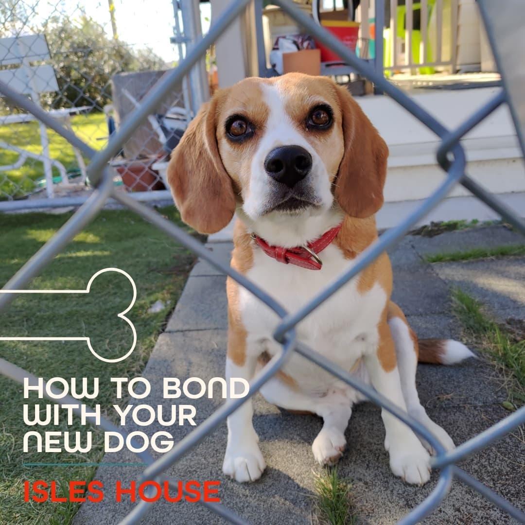愛する家族と暮らす家。 元気に駆け回るワンちゃんを見ているだけでも自然と笑顔になりますね! #犬と暮らす #犬のいる暮らし #dogperson #beagle #ビーグル